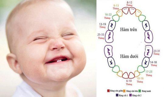 Tiến trình mọc răng của trẻ sẽ được chia theo từng độ tuổi