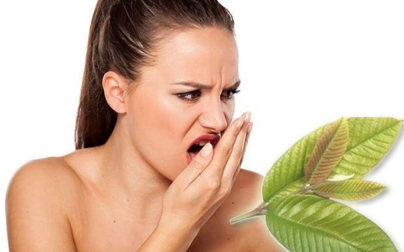 Lá ổi thực sự có công dụng đối với nhiều vấn đề về răng miệng