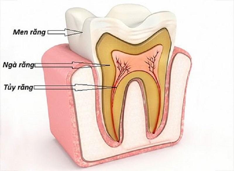 Ngà jaw là lớp mô nằm bên trong men jaw